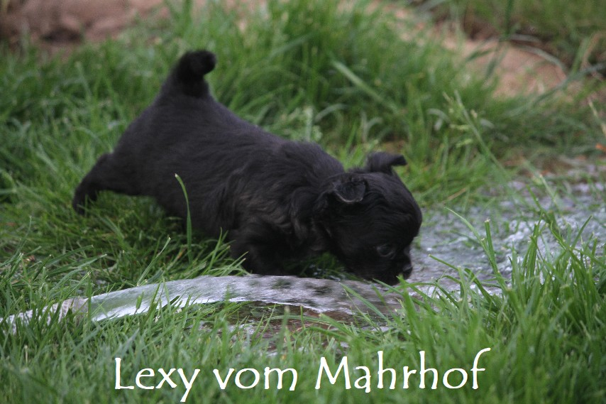 lexy_4314__2_.jpg