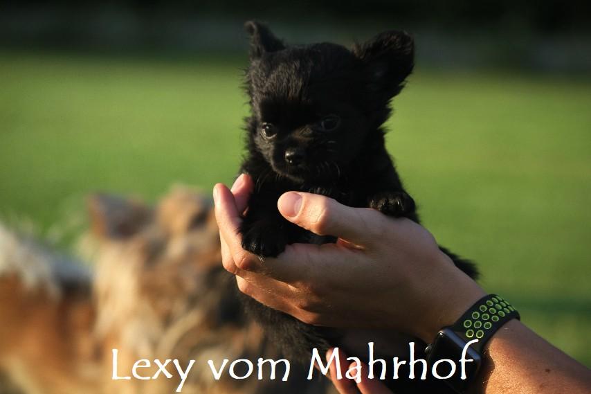 lexy_4668__15_.jpg