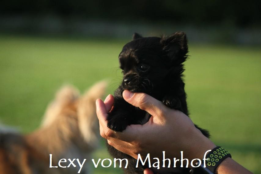 lexy_4668__16_.jpg