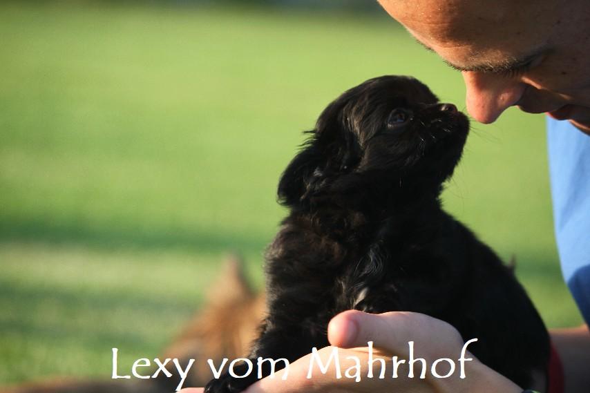 lexy_4668__5_.jpg