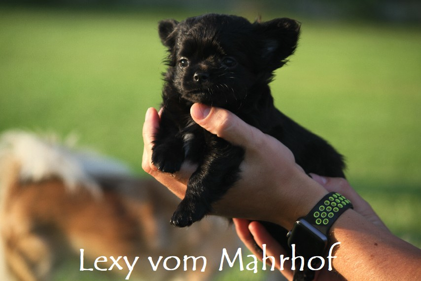 lexy_4668__9_.jpg