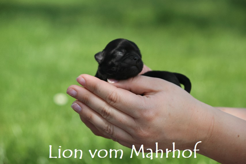 lion_2585__3__001.jpg