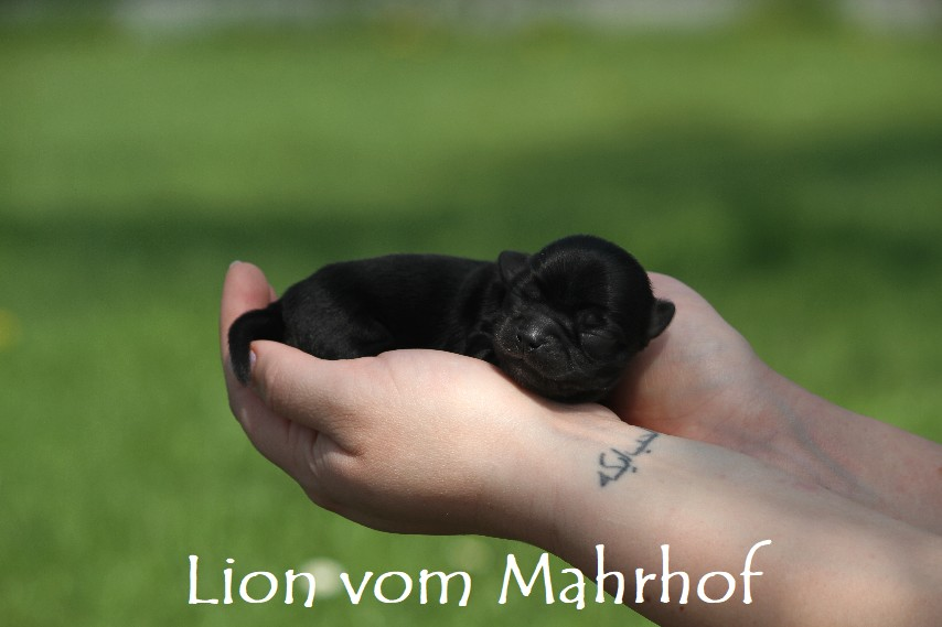 lion_2591__2_.jpg