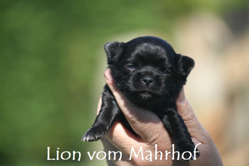 lion_2934__3_.jpg