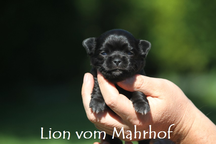 lion_2934__4_.jpg