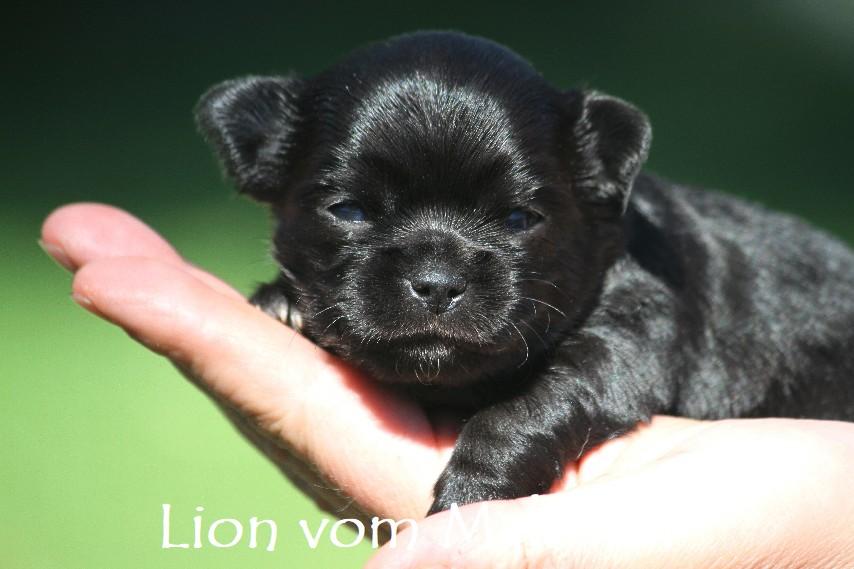 lion_2938__1_.jpg