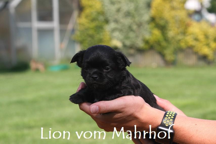 lion_3813__2__001.jpg