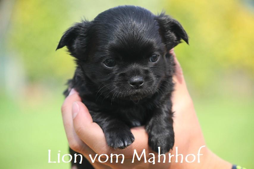 lion_3818__4_.jpg