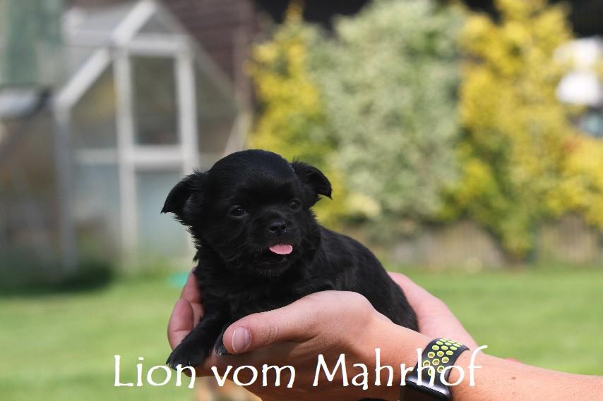 lion_3820__1_.jpg