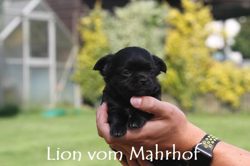 lion_3820__2__001.jpg