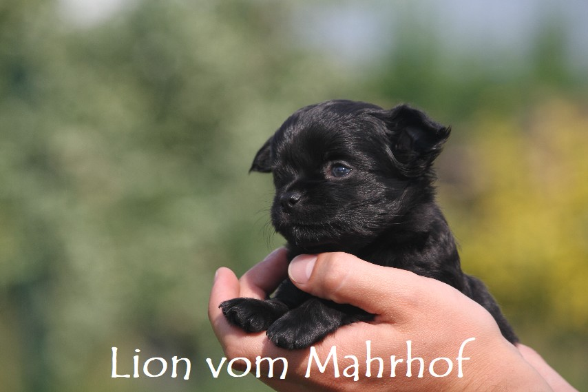 lion_3909__1_.jpg