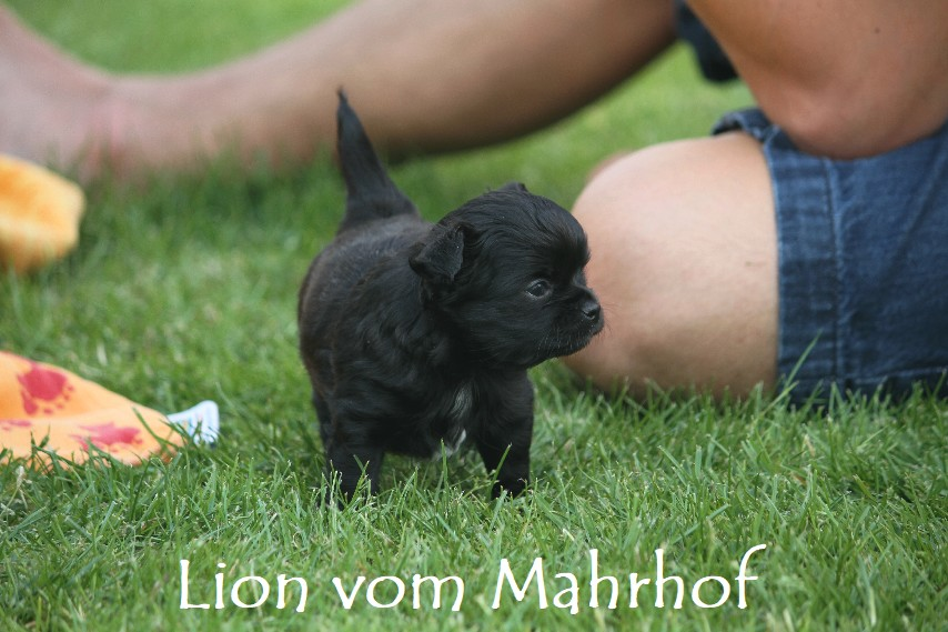 lion_3918__2_.jpg