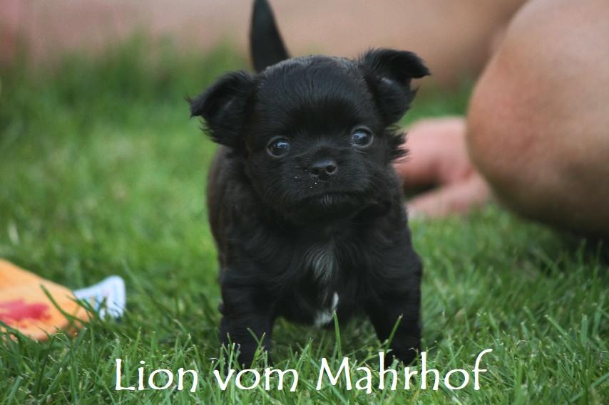 lion_3918__3_.jpg