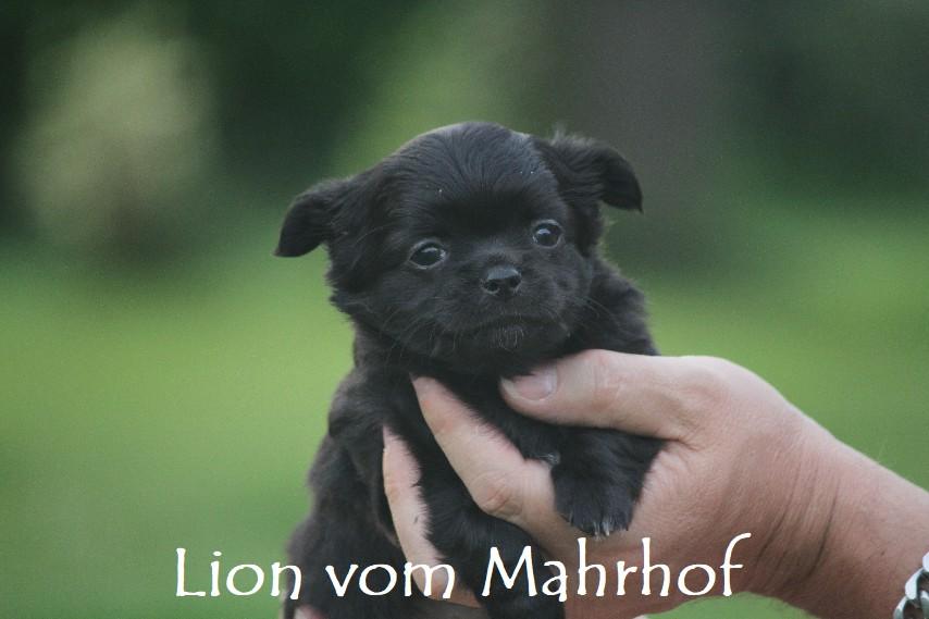lion_4269__1_.jpg