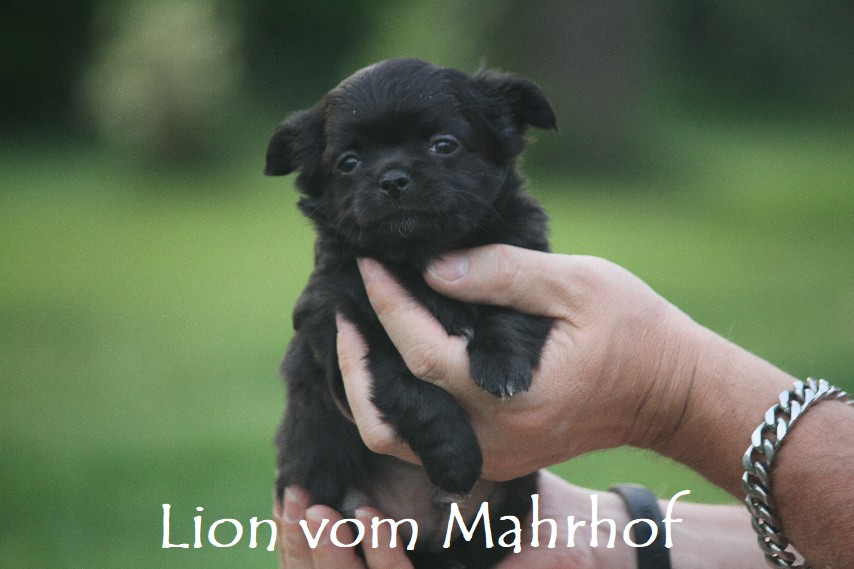 lion_4269__2_.jpg