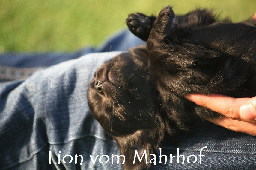 lion_4536__10_.jpg