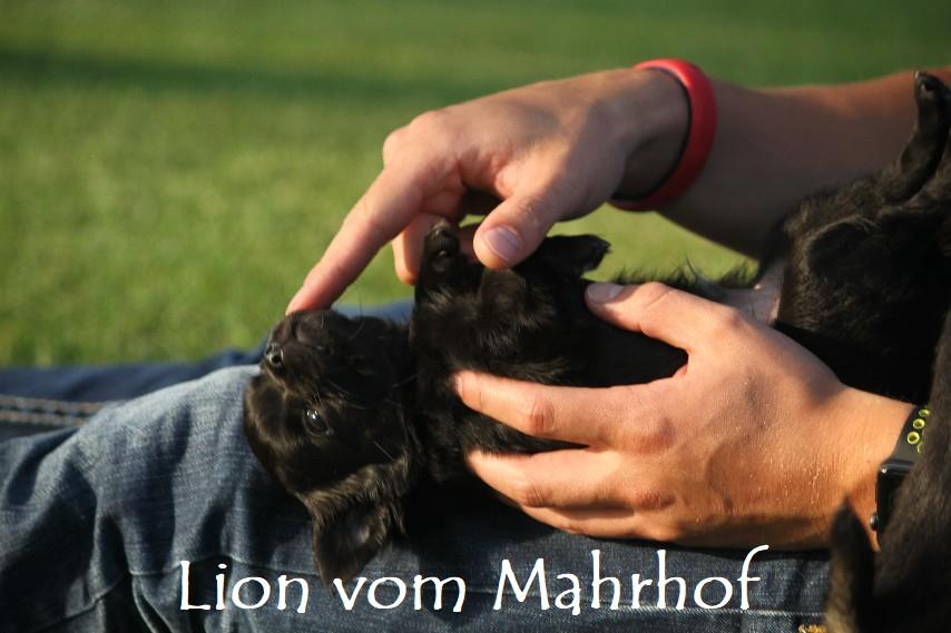 lion_4536__6_.jpg