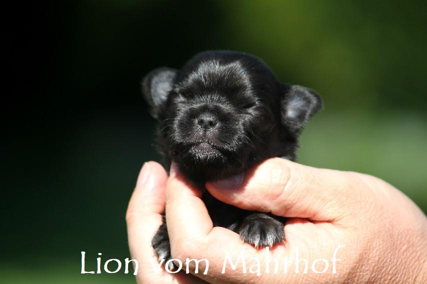 lion______2946__1_.jpg
