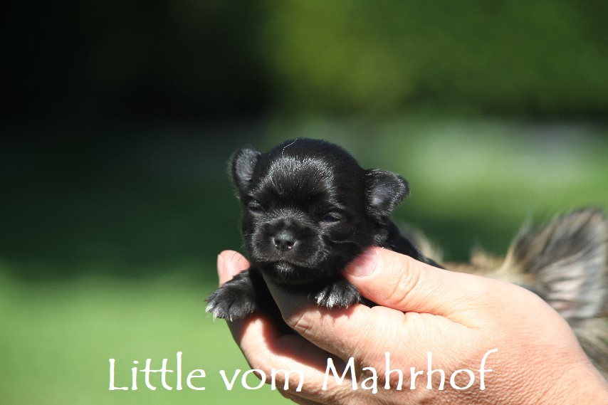 little_2946__5_.jpg