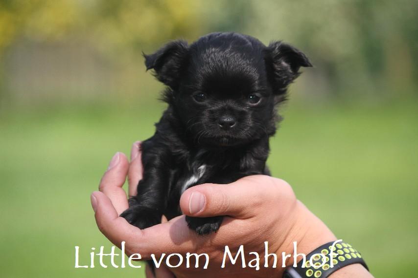 little_3909__10_.jpg