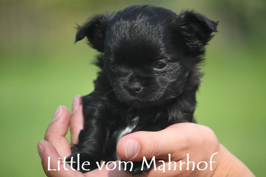 little_3909__11_.jpg
