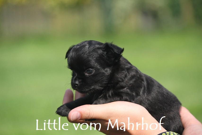 little_3909__5_.jpg