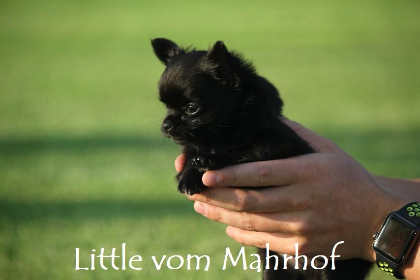 little_4563__11_.jpg
