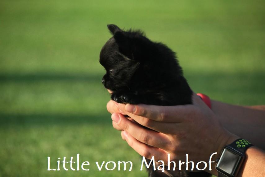 little_4563__13_.jpg