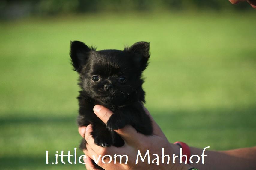 little_4563__14_.jpg