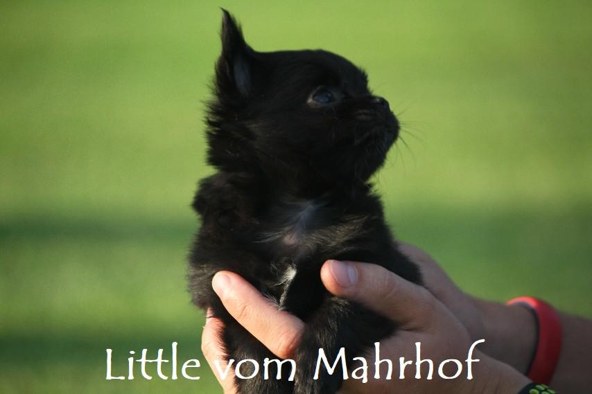 little_4563__15_.jpg