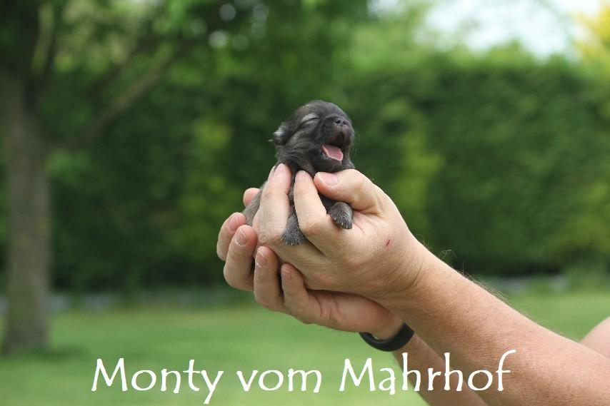 monty3353__2_.jpg