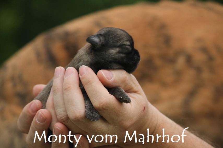 monty3353__3_.jpg