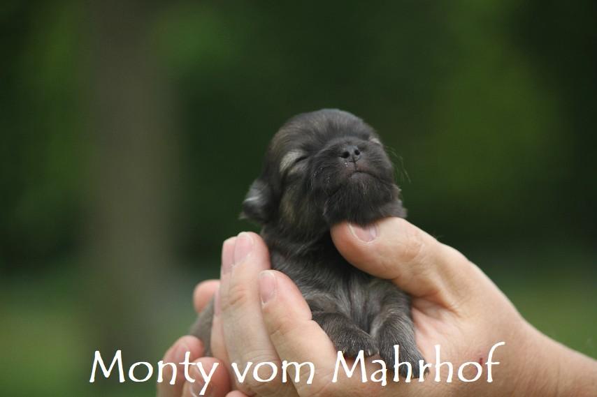 monty3353__5_.jpg