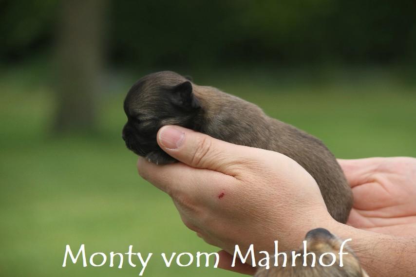 monty3353__6_.jpg