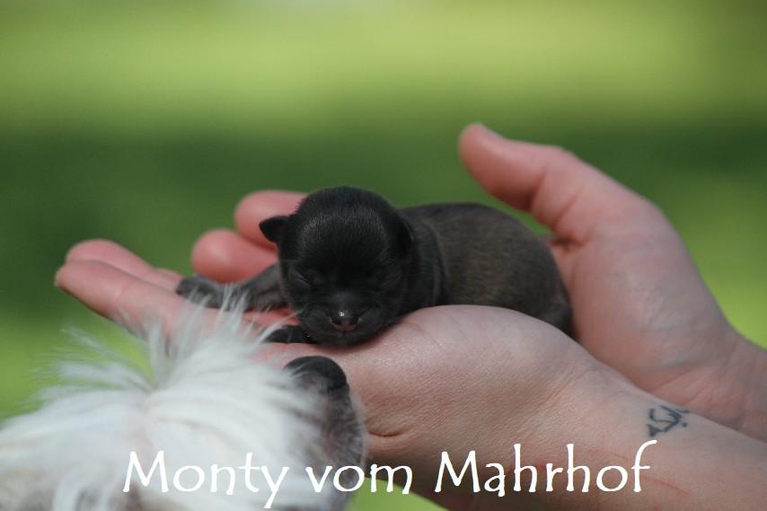 monty_2770__6_.jpg