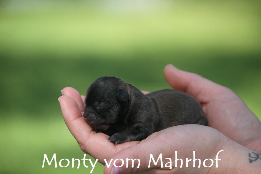 monty_2770__8_.jpg