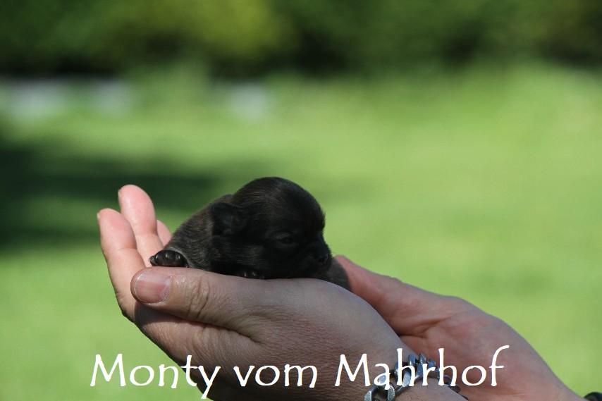 monty_3041__2_.jpg