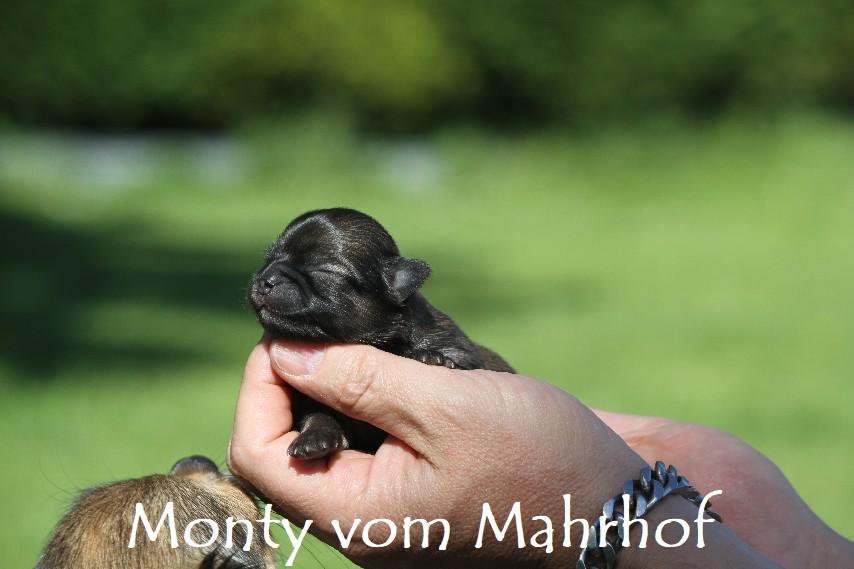 monty_3041__4_.jpg