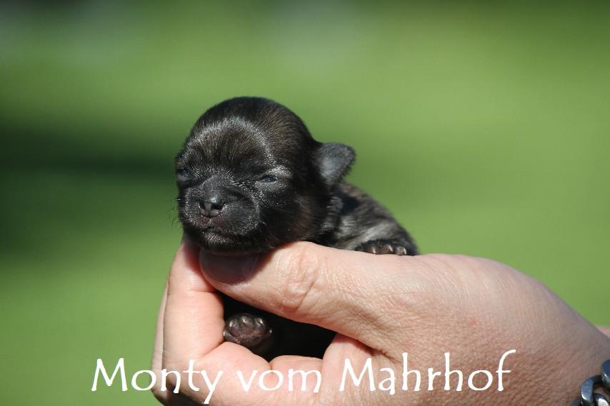 monty_3041__5_.jpg