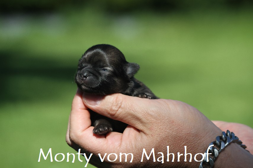 monty_3044__2_.jpg