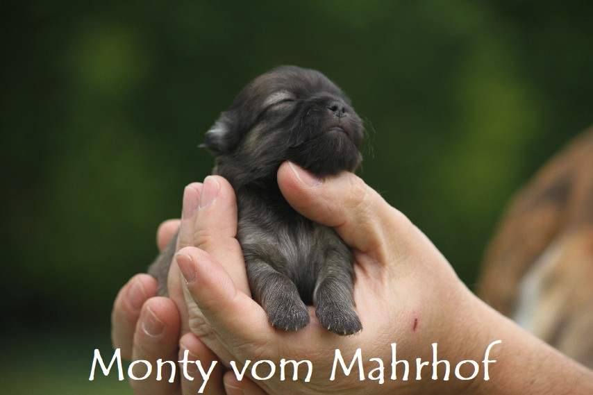 monty_3355__2_.jpg