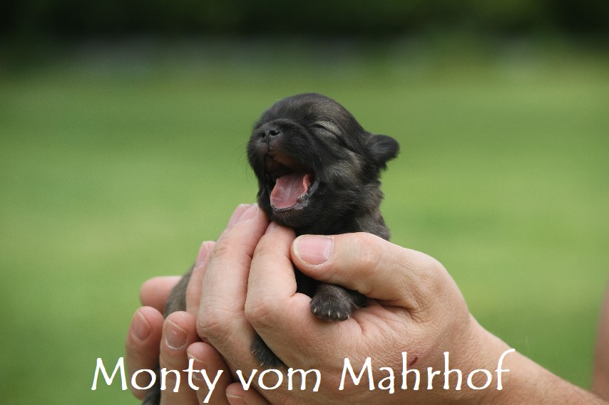 monty_3357__1_.jpg