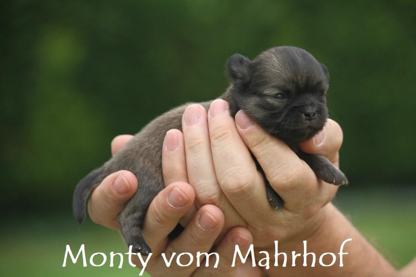 monty_3357__2_.jpg