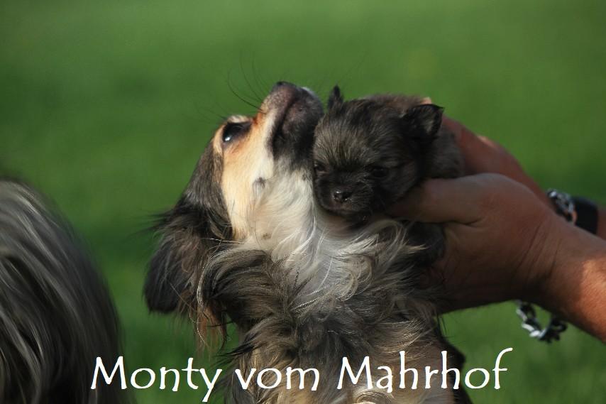 monty_4034__19_.jpg