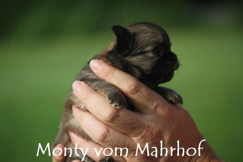 monty_4034__20_.jpg