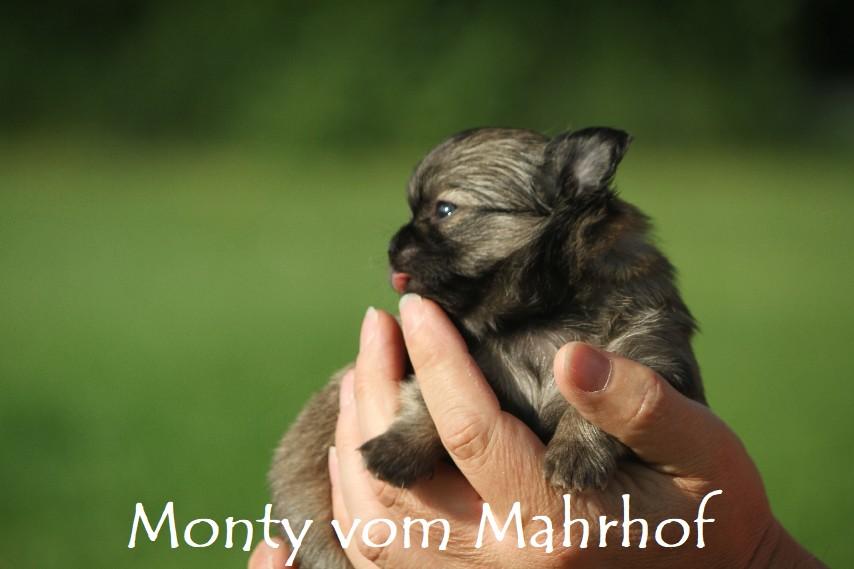 monty_4034__3_.jpg