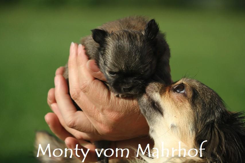 monty_4034__6_.jpg