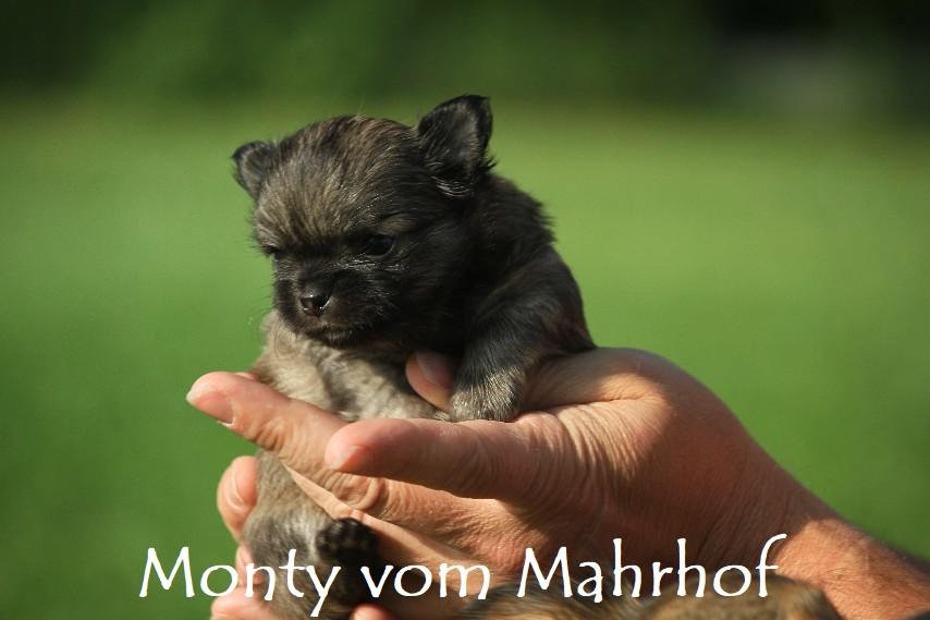 monty_4034__8_.jpg