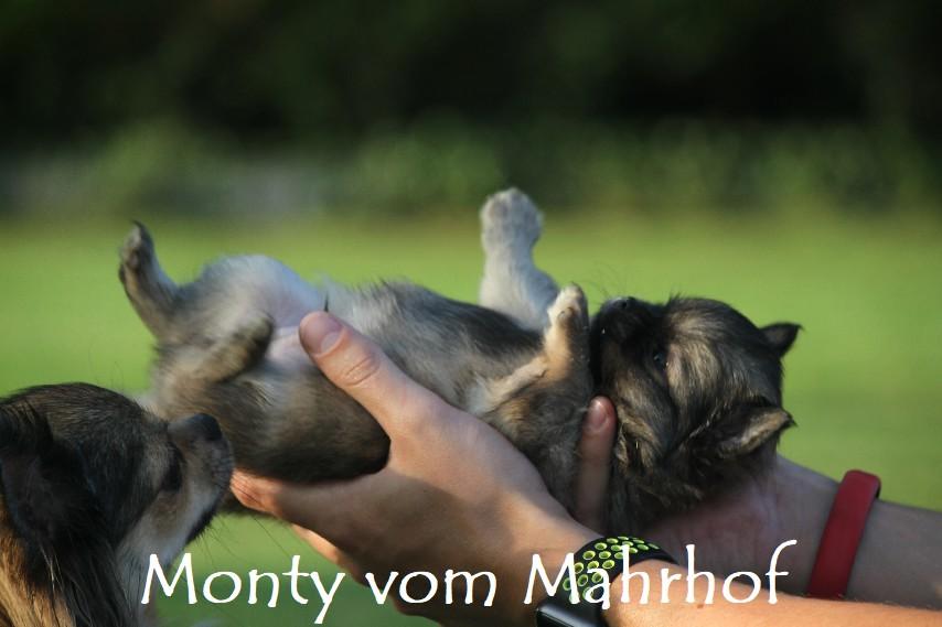 monty_4435.jpg