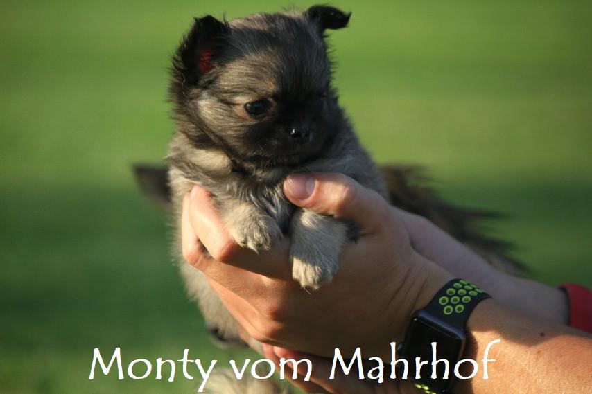 monty_4453__13_.jpg